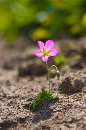 Flor joven que crece en un desierto de arena