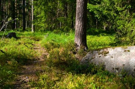 Un camino a trav�s del bosque hermoso verano verde Foto de archivo