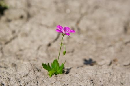 plantas del desierto: Flor joven que crece en un desierto de arena