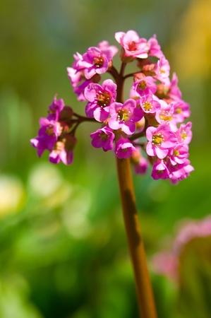 Blooming primavera flor violeta en la luz del sol Foto de archivo