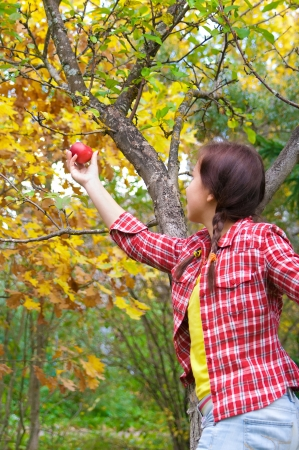 young woman is picking of apples in the orchard Stock Photo