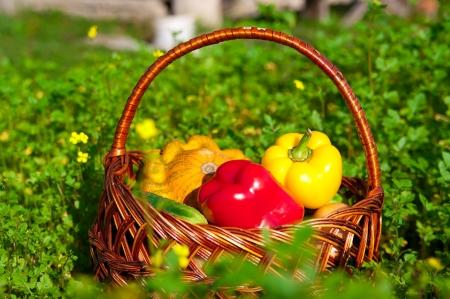 cesta con verduras frescas en un prado