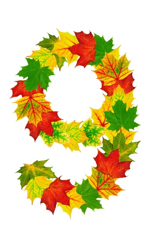 Autumn maple Leaves in the shape of number 9 isolated on white photo
