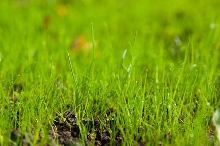 fresh spring sprouts of green grass close up Stock Photo