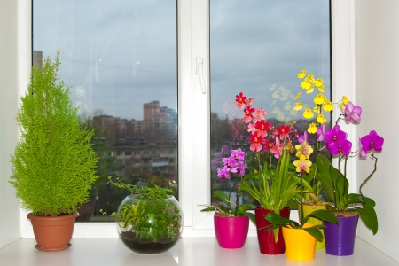 Plant comporsition (cypress and orchids) on the window-sill
