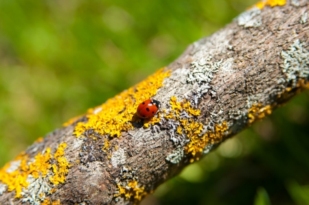 Ladybug sitting on tree trunk with moss