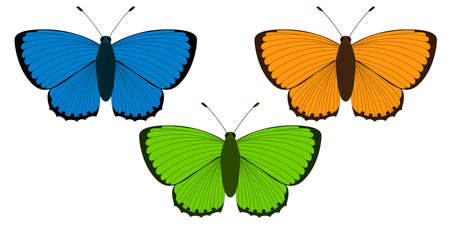 Lycaena virgaureae. Three butterflies of different colors: blue, orange and green. Vector illustration on a white.
