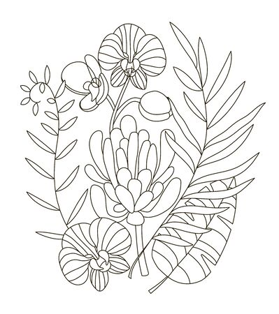 Hand drawing coloring pages for children and adults. linear style coloring book for creative creativity. Antistress coloring book with tropical flowers, protea, orchid, monstera, palm, trending tropic.
