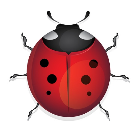 ladybug isolated on white background Stock Vector - 13907058