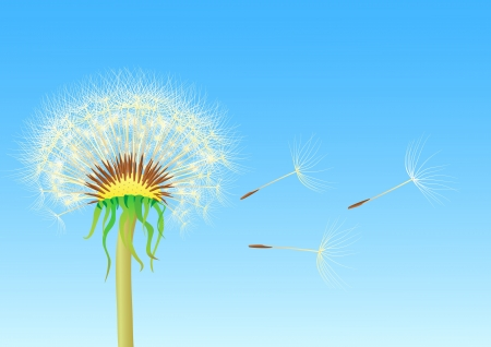 dandelion seeds blowing from stem Vector