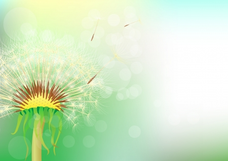 dandelion on an abstract background  Illustration