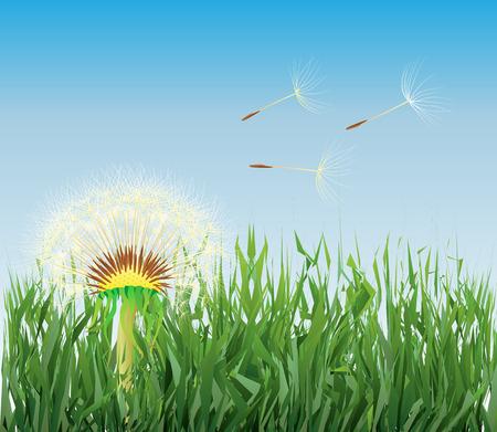 mniszek lekarski w trawie Ilustracje wektorowe