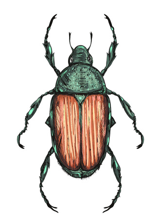 green Japanese beetle isolated on white background. colorful illustration. vector illustration