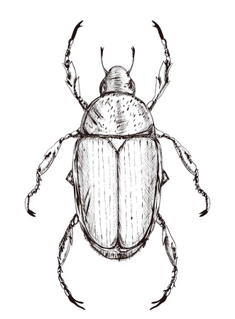 Outline Japanese beetle isolated on white background. black on white. hatching rough style. vector illustration Illustration