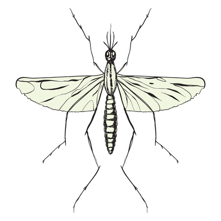 mosquito close-up isolated on white background. vector illustration Illustration