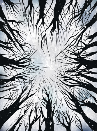 View up trees. black on white. vector illustration outline. Trees without leaves, isolated on white background. winter