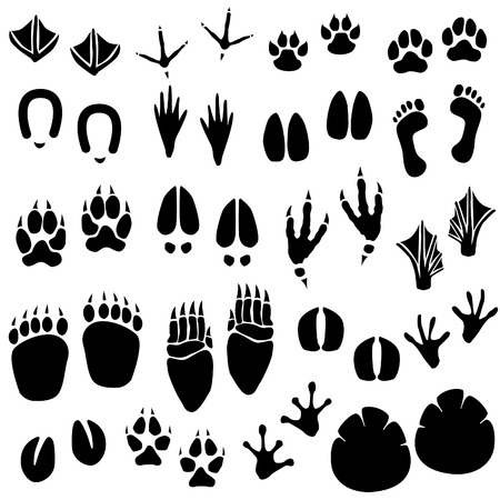 animal: Animal Footprint Track Vector