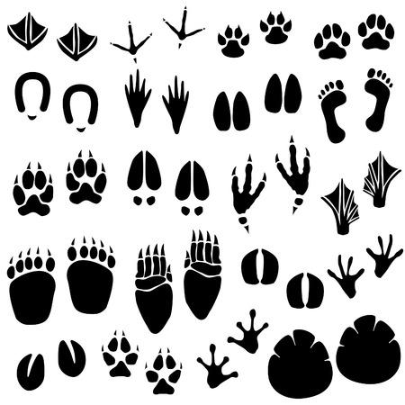 Animale Footprint Track Vector