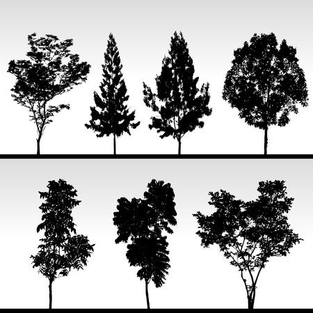 feuille arbre: Arborescence Silhouette Vector  Illustration