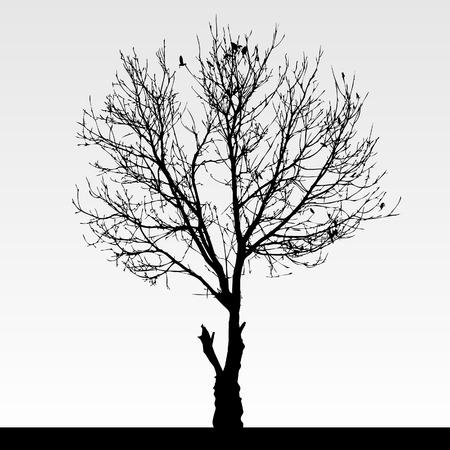 Dry Dead Tree Stock Vector - 8723515