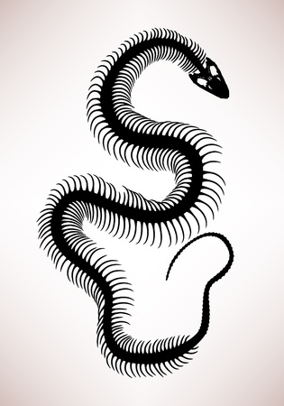 specimen: Snake Bone Skeleton