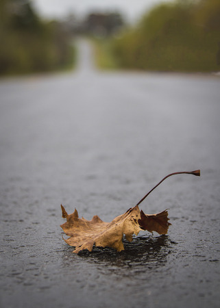 Lone Autumn Leaf on a Long and Hilly Missouri Road