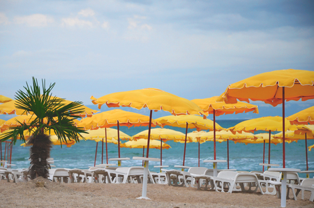 empty beach, palm tree, yellow umbrellas, white chaise lounges. No season, no tourists, assault warning, cold snap