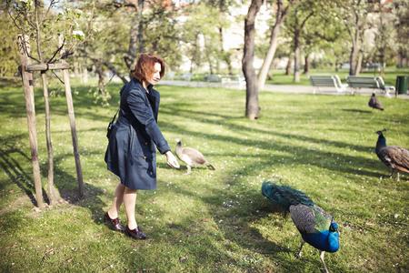 Woman walking among the peacocks in Vojanovy Sady park in Prague. Springtime.