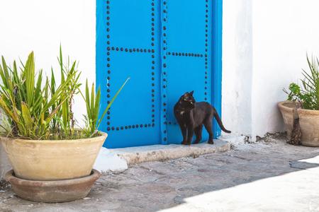 Streets of Sidi Bou Said, Tunisia. Black cat near the traditional white and blue house.