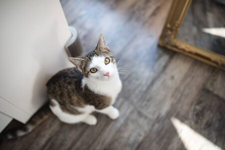 Cute young domestic tabby cat sitting on the floor, looking at camera. View from above, selective focus, copy space