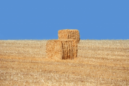 Golden haystacks and blue sky without clouds Stock Photo