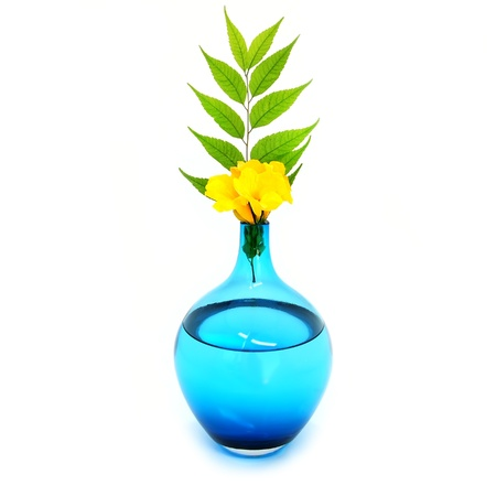 Blue vase, yellow flowers and green branch
