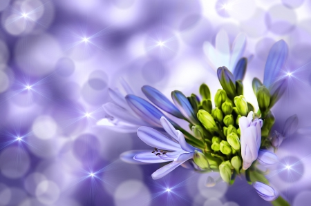 Flower on a purple background  Abstract Composition