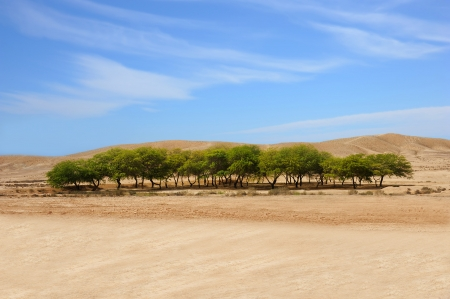 A beautiful oasis in a desert and blue sky with clouds  Stock Photo