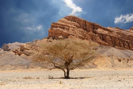 Desert tree and mountains  Desert of Faran