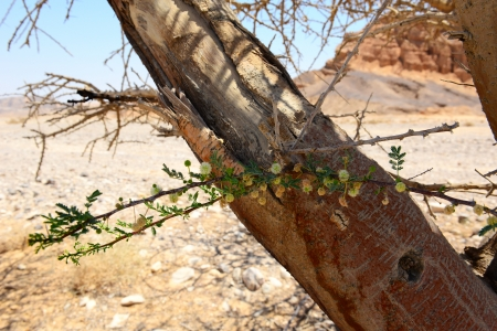 Flowers on a dry tree in a desert Stock Photo