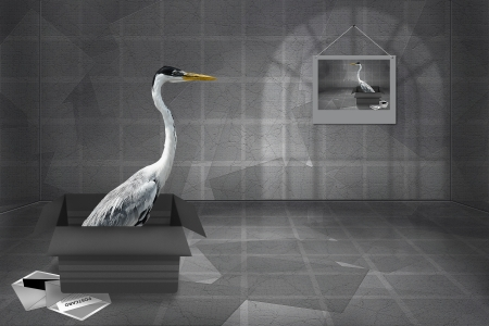 rigorous: Greeting Card with Grey Heron in a gift box  Business rigorous style  Stock Photo