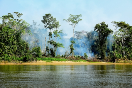 Fire in a jungle on the river Madre de Dios. Peru - Manu National Park.
