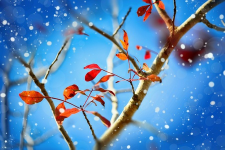 Red leaves on a blue background with bokeh