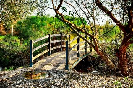 Small wooden bridge