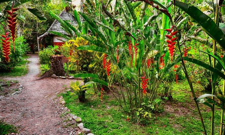 Footpath in tropical garden Stock Photo