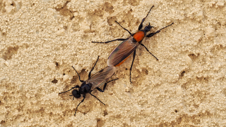 Two insects mating on the wall. Stock Photo