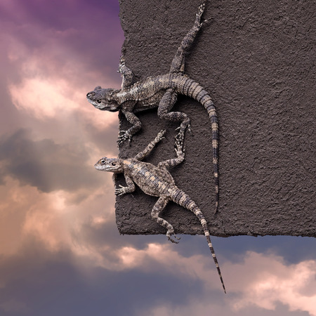 Two lizards on the edge of the roof on the sky background.