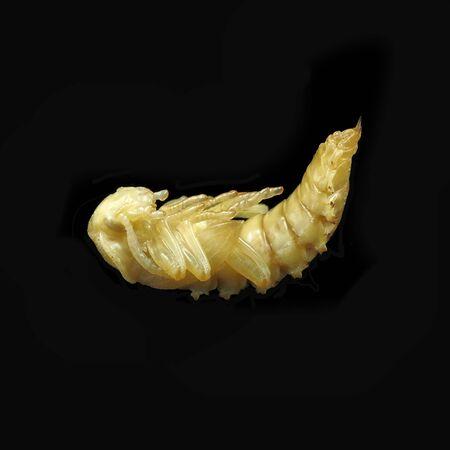 Superworm larvae Zophobas morio. Pupa of Darkling beetle. Archivio Fotografico