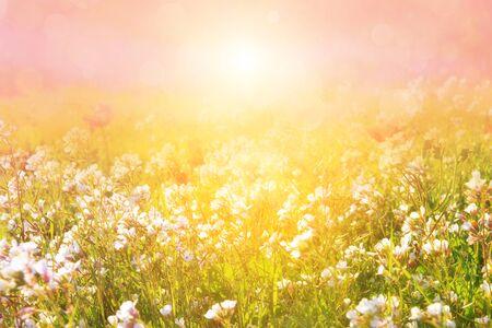 Morgenwiese in den Sonnenstrahlen. Unscharfes künstlerisches Bild. Standard-Bild