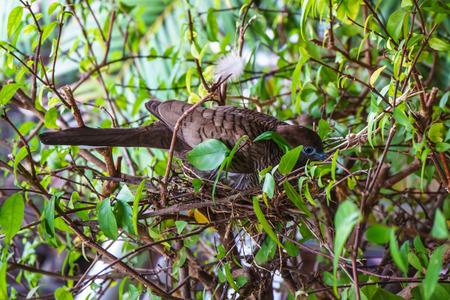 incubate: Birds are incubating