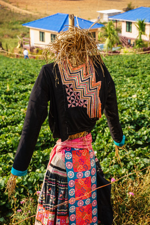 chaff: A woman scarecrow on farm Strawberry make from chaff