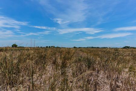 hay field: Paesaggio campo di fieno e il cielo