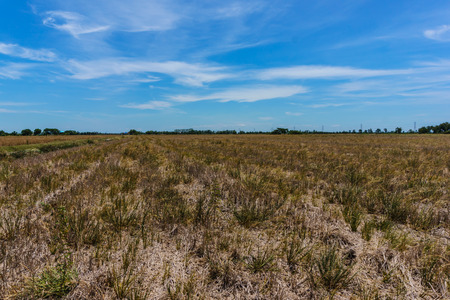 hay field: Landscape hay field and sky Stock Photo