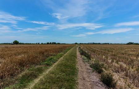 hay field: Landscape hay field and sky Archivio Fotografico